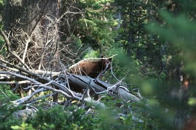 Grand Teton National Park-36